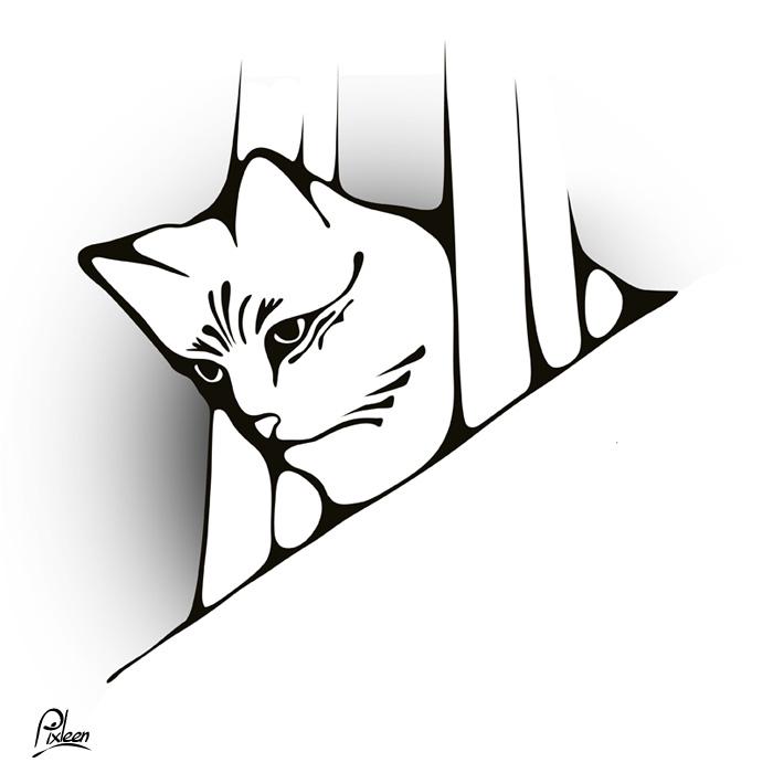 Chat observateur